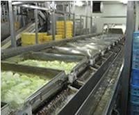 レタス生産ライン:洗浄